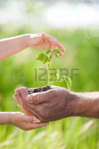 Picture of human hand with plant Misconceptions Workers Comp self insurance