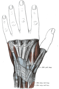 Graphic of DeQuervain's Tenosynovitis Hand