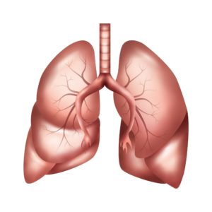 Graphic Of Exacerbation Lungs