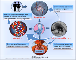 Cycle Chart Of Cleaners Asthma Causes