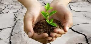 Picture of Hands Caring Plant Policy Provisions Important