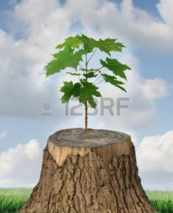 Picture of new life of tree Available Earlier of Mods