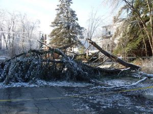 Fallen Tree Spike In Workers Comp Claims Typhoon Damage