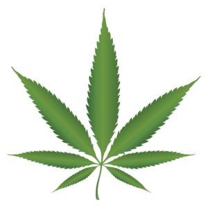 Graphic Of Marijuana Leaf Job Alcohol v. Marijuana Debate In White Background