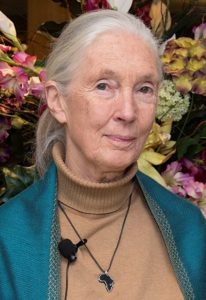 Picture Of Jane Goodall Institute Flower Background
