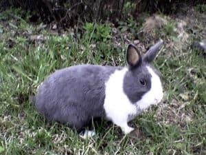 picture dutch apple itunes store apps rabbit