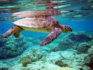 Sea Turtle reduced workers comp reserves under the sea
