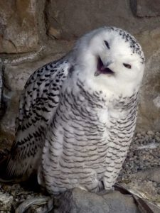 picture of wise old workers comp reopened claims owl