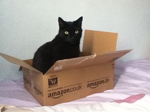 Picture of cat Amazon Box Jeff Bezos's Workers Comp