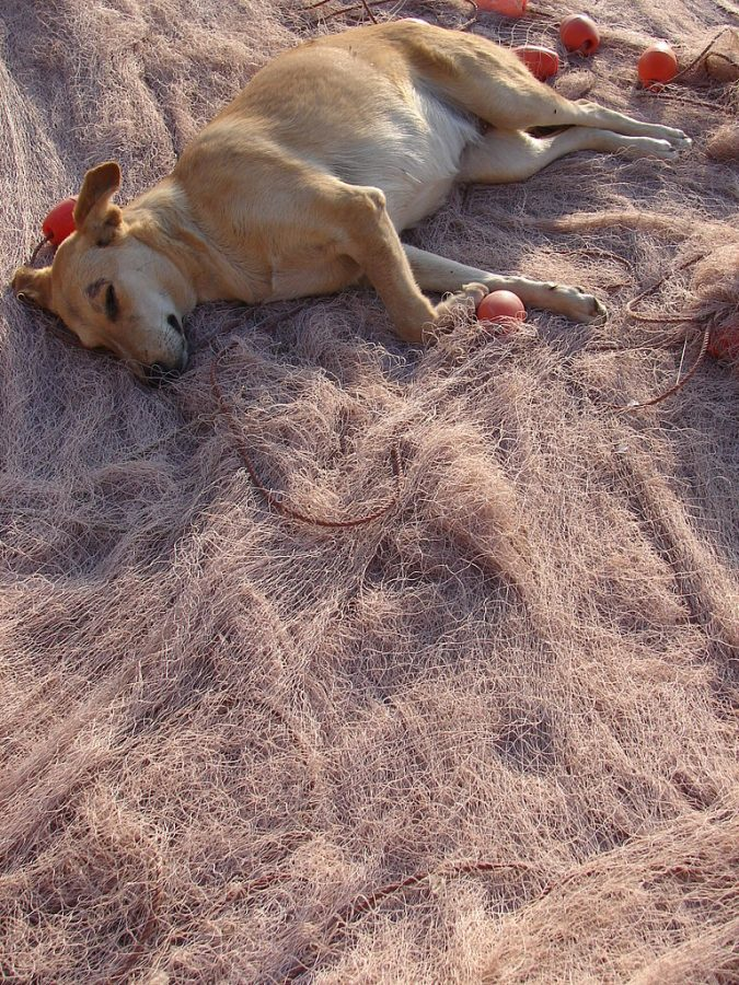 pic of dog sleeping workers comp video presentations